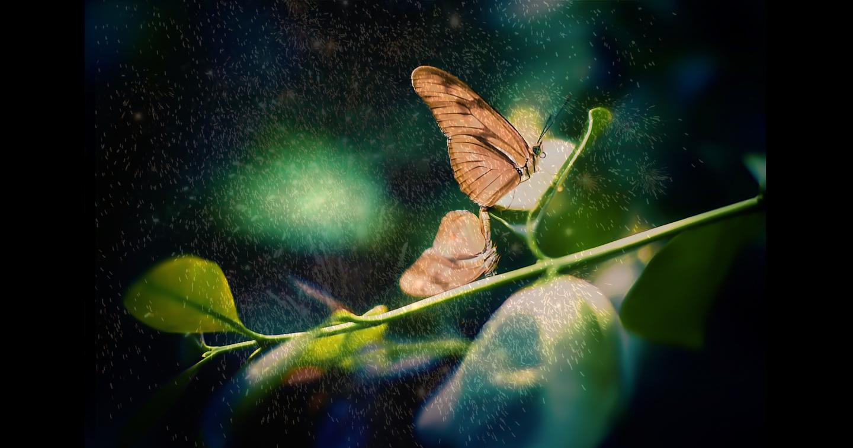 """""""魂が聴く、花火の声""""ー運命の女性を愛しぬく理由『蝶の涙』《公開予告》ー"""